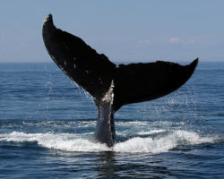 Geeky Gay Episode 72: Whale Watching